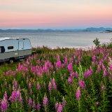 Husvagn vid vattnet med sommarblomster i förgrunden