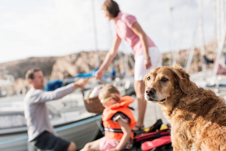 Golden retriever med familj i bakgrund på båtbrygga